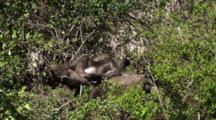 Olive Baboons In Serengeti NP, Tanzania