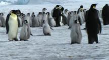 View Of An Emperor Penguin Colony