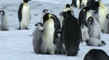 Penguin Royalty Free Stock Footage