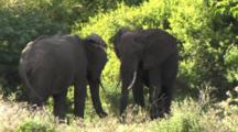 Elephants Relaxing In The Shade In Lake Manyara NP