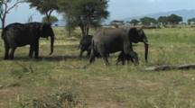 Elephant Family Walking In Tarangire NP