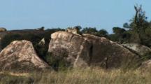 Cheetah Resting On A Rock