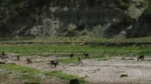 Wildlife Walking In A Dry River In Tarangire National Park