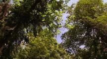 Rainforest Gully Micro-Habitat, Kimberley