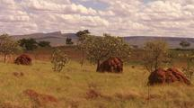 Termite Mound in Landscape, Kimberly