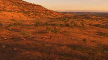 Wild Horses Run Through Landscape At Dawn During Aerial Cattle Muster, Kimberley