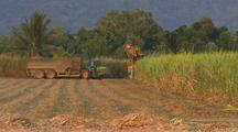 Sugarcane Fields & Harvesting