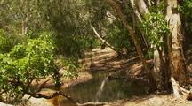 Billabong Waterhole And Eucalyptus Gum Tree In River Landscape