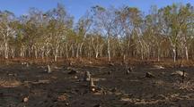 Burnt Drought Landscape After Grass Fire