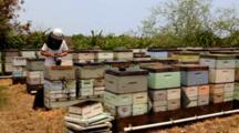 Beekeeper Working Smoking Bees