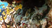 Hermit Crabs On A Rocky Reef With School Of Fish