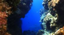 Crevice Between Coral Formations With Fish