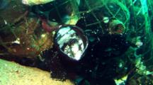Black Giant Anglerfish Sits In Front Of Debris, Opens Mouth Twice