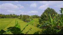 Balinese Rice Fields Time Lapse