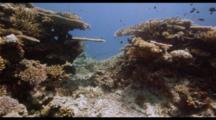 Fiji Shallow Reef