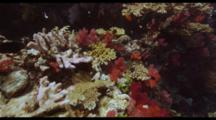 Fiji Shallow Reef