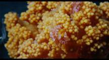 Porcelain Crab On Soft Coral