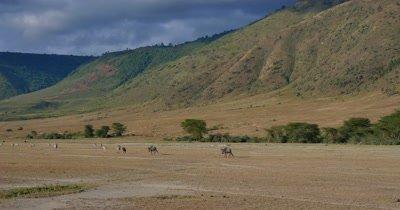 Wildebeest Scenic