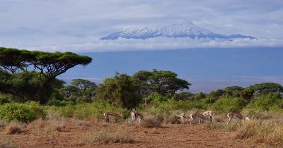 Antelope and Mount Kilimanjaro