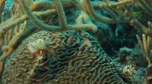 Soft Corals And Christmas Tree Worms