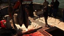 Tuna Catch Being Unloaded From Ship