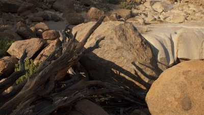 Mid shot dry river bed with boulders and dead wood as shadow moves across and sun bathes scene