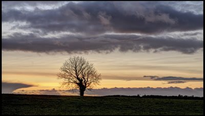 Post sunset coloured clouds sweep past lone tree growing on hedgeline on Mnedip Hills, Somerset, UK