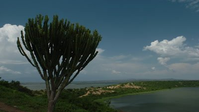 Big wide angle scenic over Lake Edward with blue sky featuring candelabra euphorbia in foreground in Queen Elizabeth National Park, Uganda