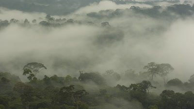 Wide angle scenic establishing shot over the canopy of misty rainforest with clouds in Borneo