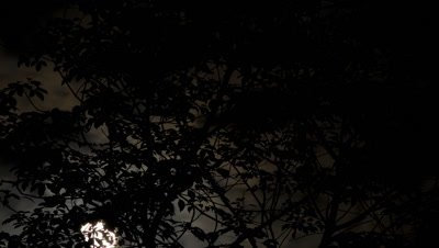Mid shot moon and clouds passing behind silhouetted black tree branches