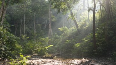 Medium wide angle shafts of sunlight stream into forest clearing with muddy pool in Xishuangbanna, China