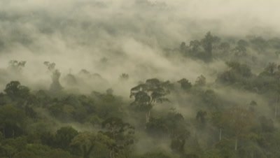 Medium wide angle panning view as move across and over misty rainforest canopy Borneo