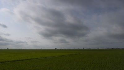 Wide angle flat green paddy fields with monsoon clouds coming towards camera