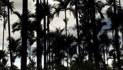 Medium wide angle building rain clouds and sun moving steadily behind tropical palm forest