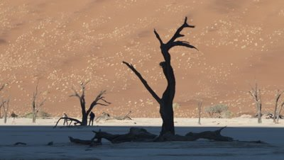 Mid shot dead trees in the desert with shadow moving over sand dune as sun rises