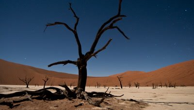 Medium wide angle dead tree by moonlight in desert dune landscape with starry sky