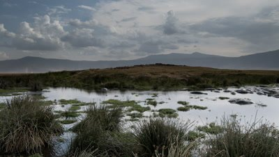 Wide angle pan right across Mandusi Swamp to hippo pool with bathing hippos, blowing dust and evaporating clouds behind and Ngorongoro crater walls