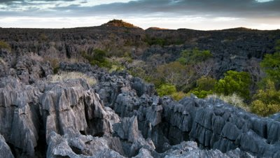 Medium wide angle evening view over karst outcrops and forest canopy of Tsingy de Bemaraha National Park as sun sets