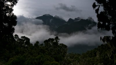 Medium wide angle swirling cloud framed by trees clears to reveal the Portal Peaks of the Ruwenzori Mountains