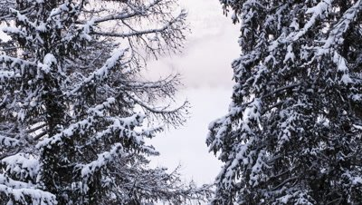 Mid shot clouds swirling and clearing behind snow laden fir trees