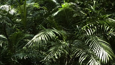 Mid shot sunlight and shadows moving over young palm trees on the forest floor