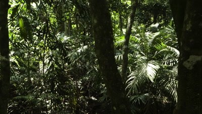 Medium wide angle tracking shot through rainforest trees with dappled sunlight and rippling shadows moving across foliage