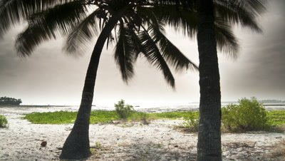 Wide angle track behind coconut palms towards beach as rain clouds alternating with sunshine move over the sea
