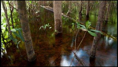 Top shot of waterflow amongst trees