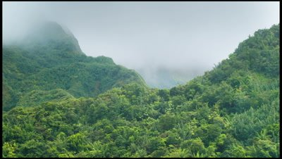 Low cloud over forest in Morne Trois Pitons national Park, Dominica