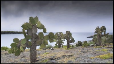 Grey clouds sweep up channel between islands with Opuntia cactus