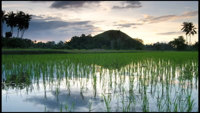 Sunset and reflections in wet rice paddy in the Philippines