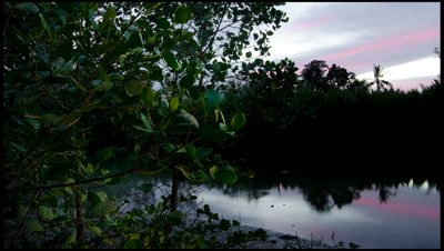 Dusk to darkness over river and synchronous firefly tree