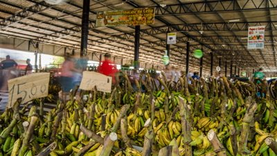 Reveal of busy wholesale banana market in Manaus