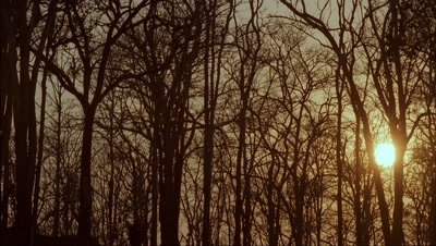 Mid shot looking up through deciduous woodland trees to orange sun which then sets into night